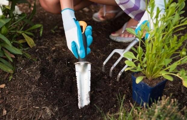 Jak założyć swój pierwszy ogród?