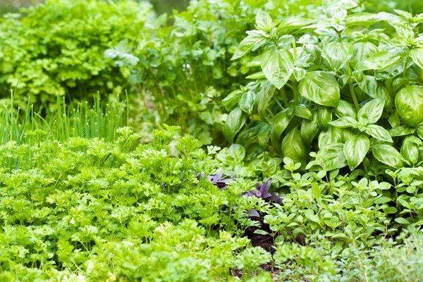 Zasady sadzenia ziół